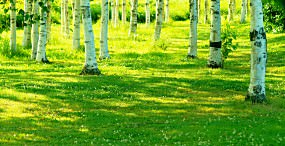 森林・草原の壁紙#96サムネイル