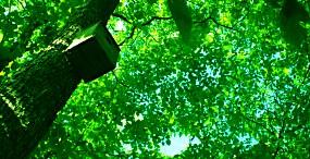 森林・草原の壁紙#98サムネイル