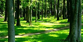 森林・草原の壁紙#99サムネイル