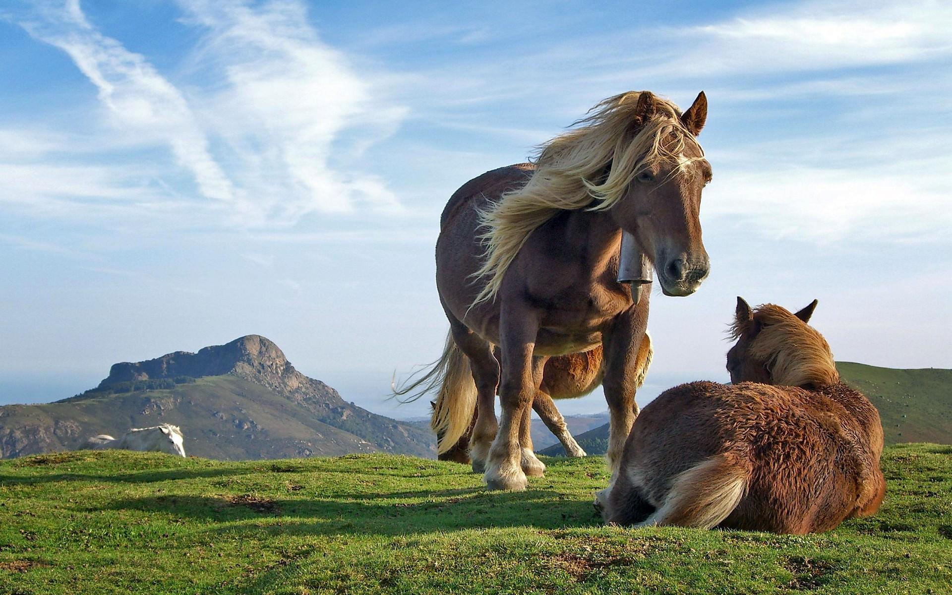 お馬さんの動物壁紙