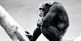 動物(その他)の壁紙#39サムネイル