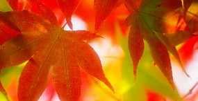 植物・葉の壁紙#101サムネイル
