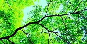 植物・葉の壁紙#15サムネイル