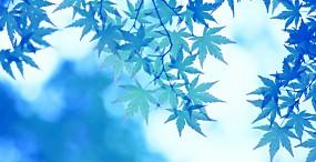 植物・葉の壁紙#18サムネイル