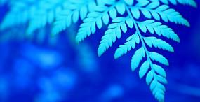 植物・葉の壁紙#19サムネイル