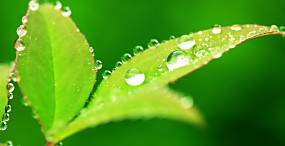 植物・葉の壁紙#21サムネイル