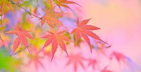 植物・葉の壁紙#22サムネイル