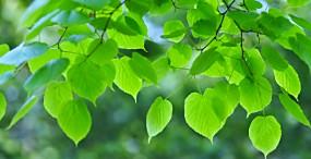 植物・葉の壁紙#25サムネイル