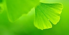 植物・葉の壁紙#28サムネイル