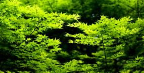 植物・葉の壁紙#29サムネイル