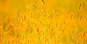 植物・葉の壁紙#35サムネイル