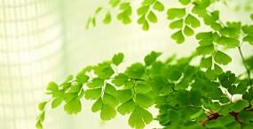 植物・葉の壁紙#38サムネイル