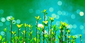 植物・葉の壁紙#40サムネイル