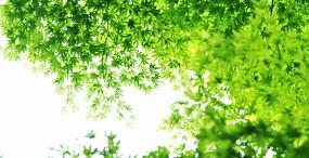 植物・葉の壁紙#41サムネイル