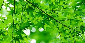 植物・葉の壁紙#42サムネイル
