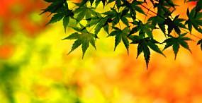 植物・葉の壁紙#47サムネイル