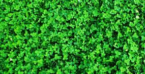 植物・葉の壁紙#5サムネイル
