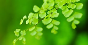 植物・葉の壁紙#51サムネイル