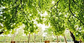 植物・葉の壁紙#54サムネイル
