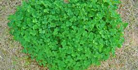 植物・葉の壁紙#56サムネイル