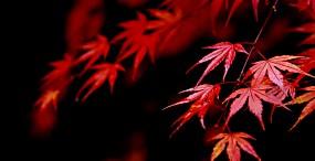 植物・葉の壁紙#6サムネイル