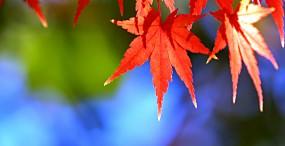 植物・葉の壁紙#60サムネイル