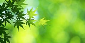 植物・葉の壁紙#62サムネイル