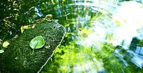 植物・葉の壁紙#63サムネイル