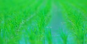 植物・葉の壁紙#64サムネイル