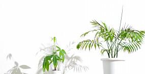 植物・葉の壁紙#65サムネイル