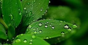 植物・葉の壁紙#66サムネイル