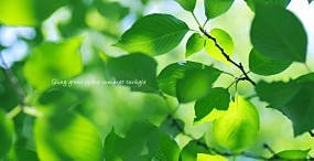 植物・葉の壁紙#67サムネイル