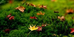 植物・葉の壁紙#68サムネイル