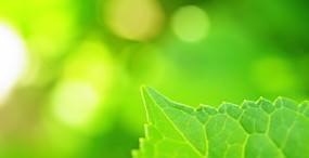 植物・葉の壁紙#74サムネイル