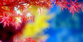 植物・葉の壁紙#76サムネイル