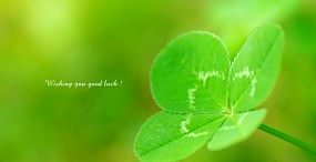 植物・葉の壁紙#80サムネイル