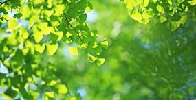 植物・葉の壁紙#81サムネイル