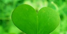 植物・葉の壁紙#90サムネイル