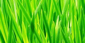 植物・葉の壁紙#91サムネイル
