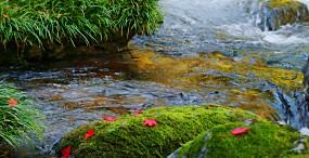 川の壁紙#10サムネイル