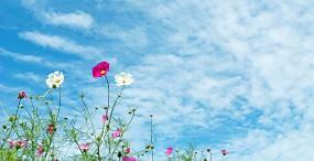 空・雲の壁紙#65サムネイル
