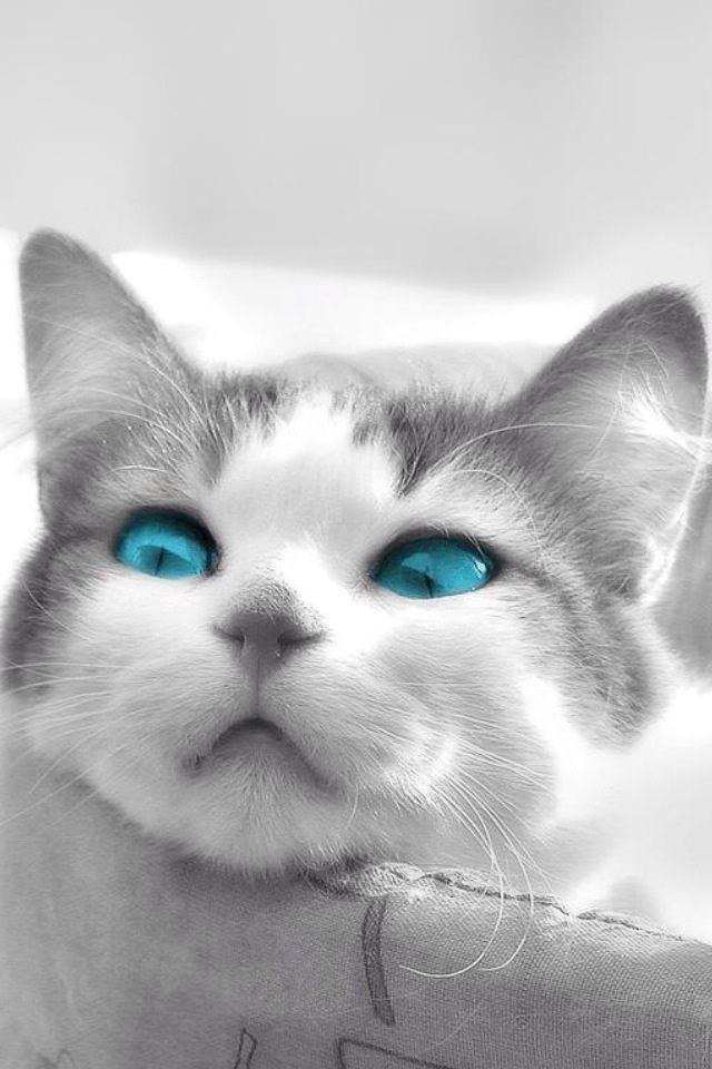 猫のキモチのスマホ用壁紙(iPhone4S用)