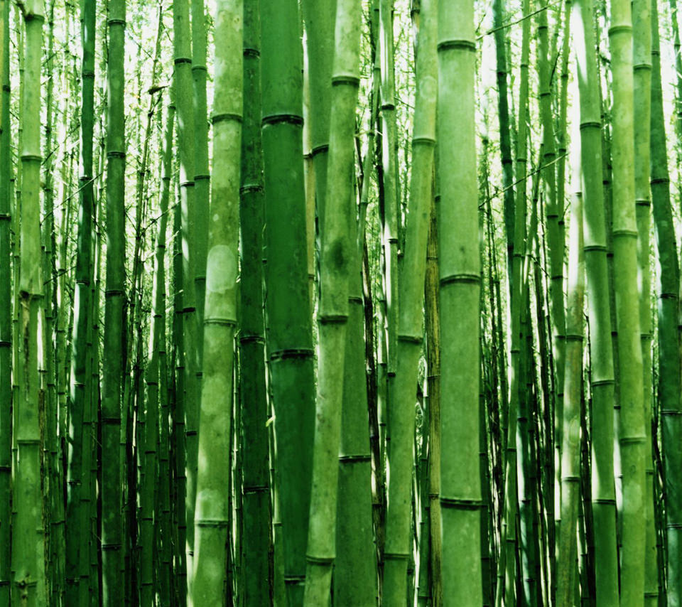 竹林のスマホ用壁紙(Android用/960×854)