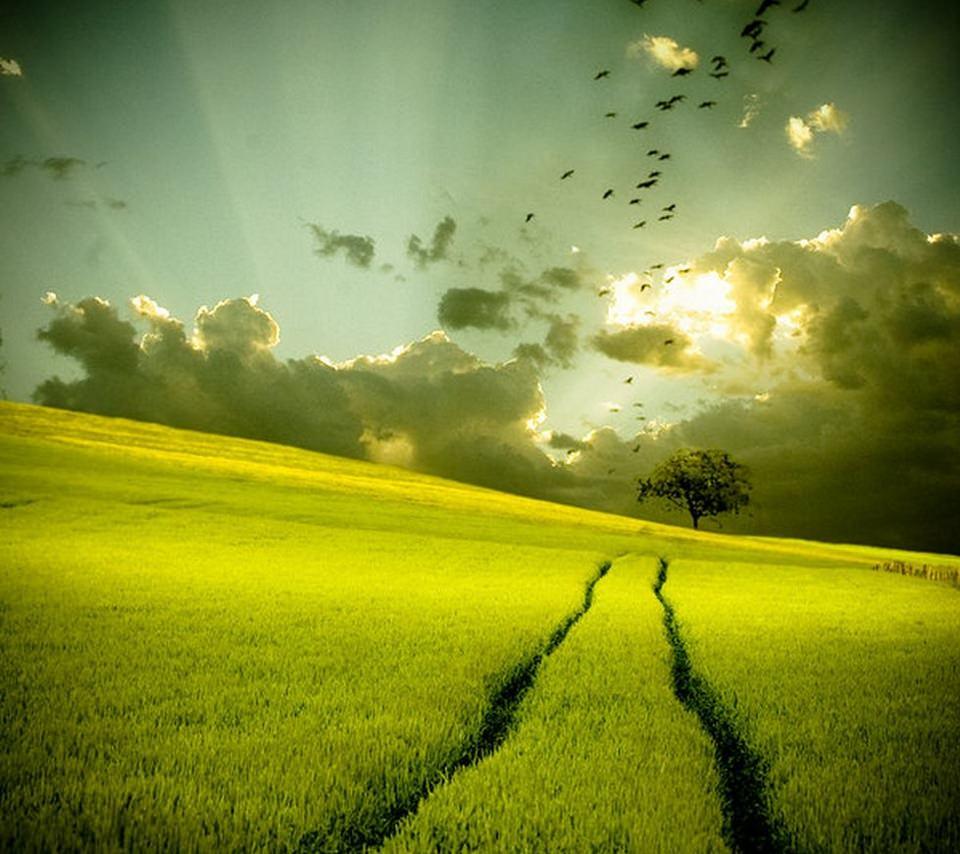 緑の田舎のスマホ用壁紙(Android用/960×854)