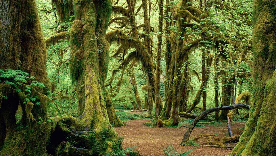古代の森の壁紙(PSP Vita用/960×544)
