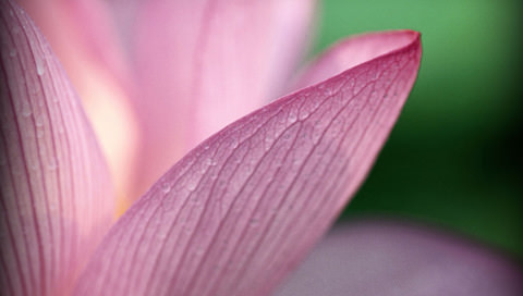 記憶の花の壁紙(PSP用/480×272)