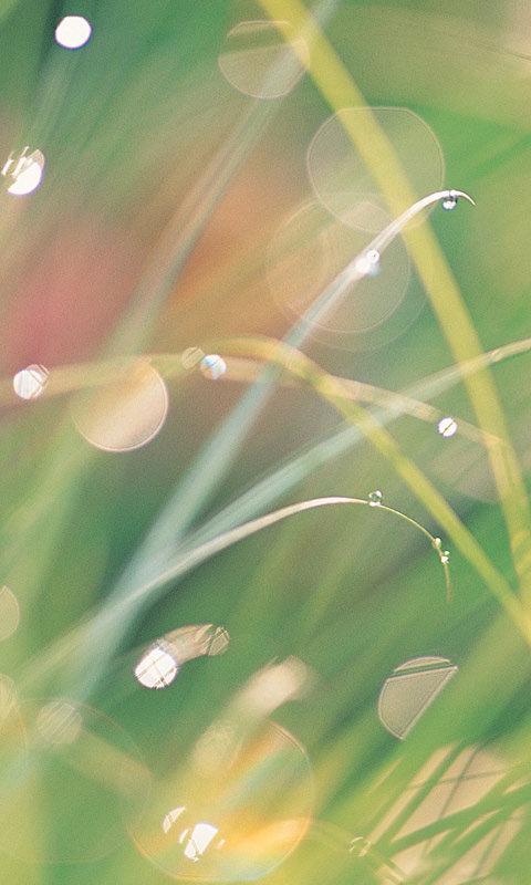 夏の夢のスマホ用壁紙(Android用/480×800)