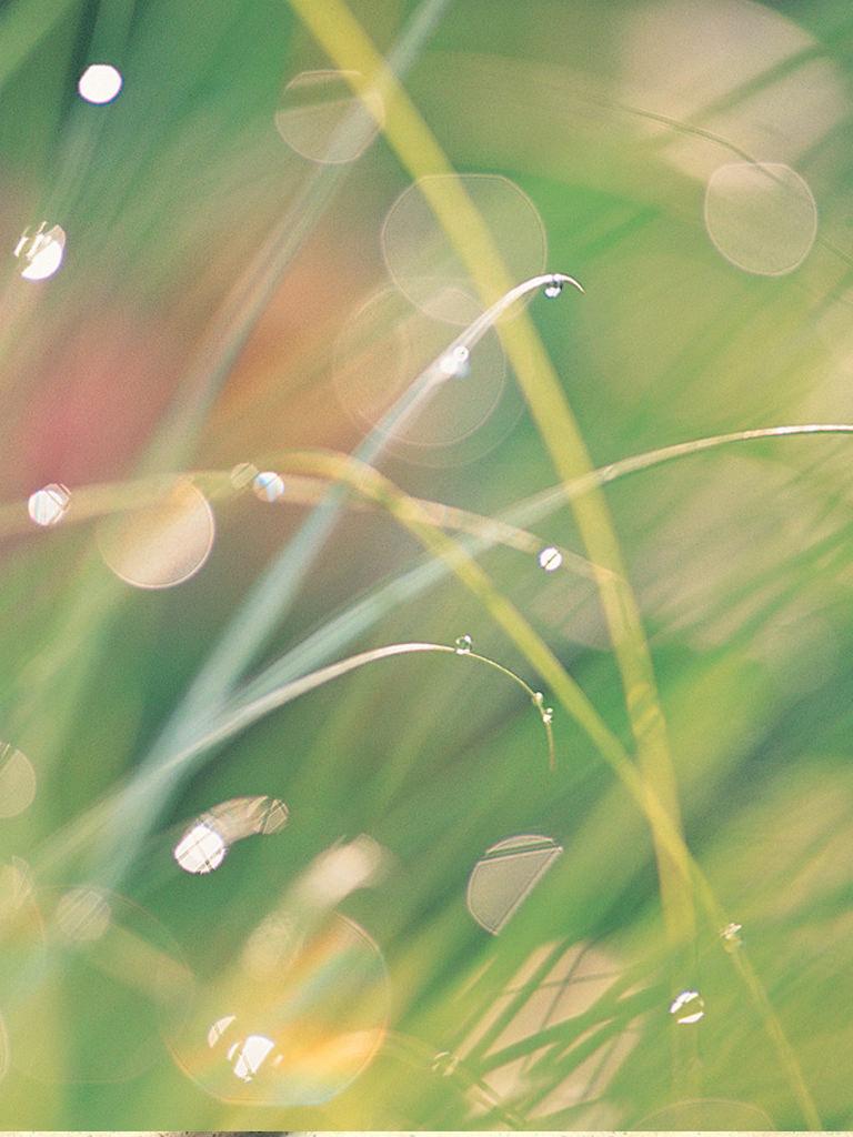 夏草の壁紙(iPad用/768×1024)