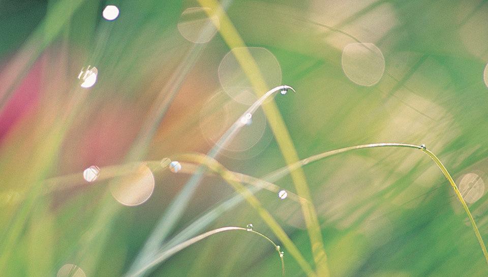 夏草の壁紙(PSP Vita用/960×544)
