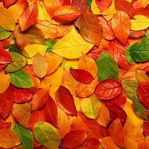 落ち葉の壁紙(iPad3用/2048×2048)